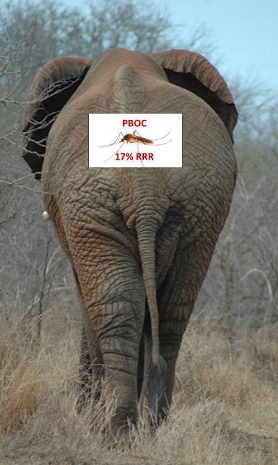 50bps-n-elephant